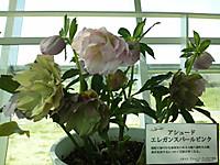 Dsc_00451