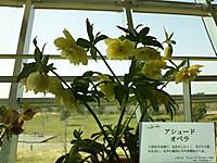 Dsc_00491